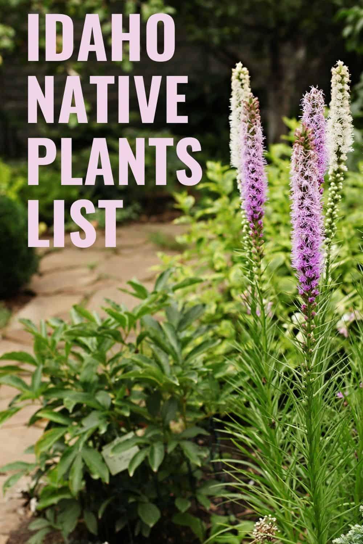 Idaho native plants list