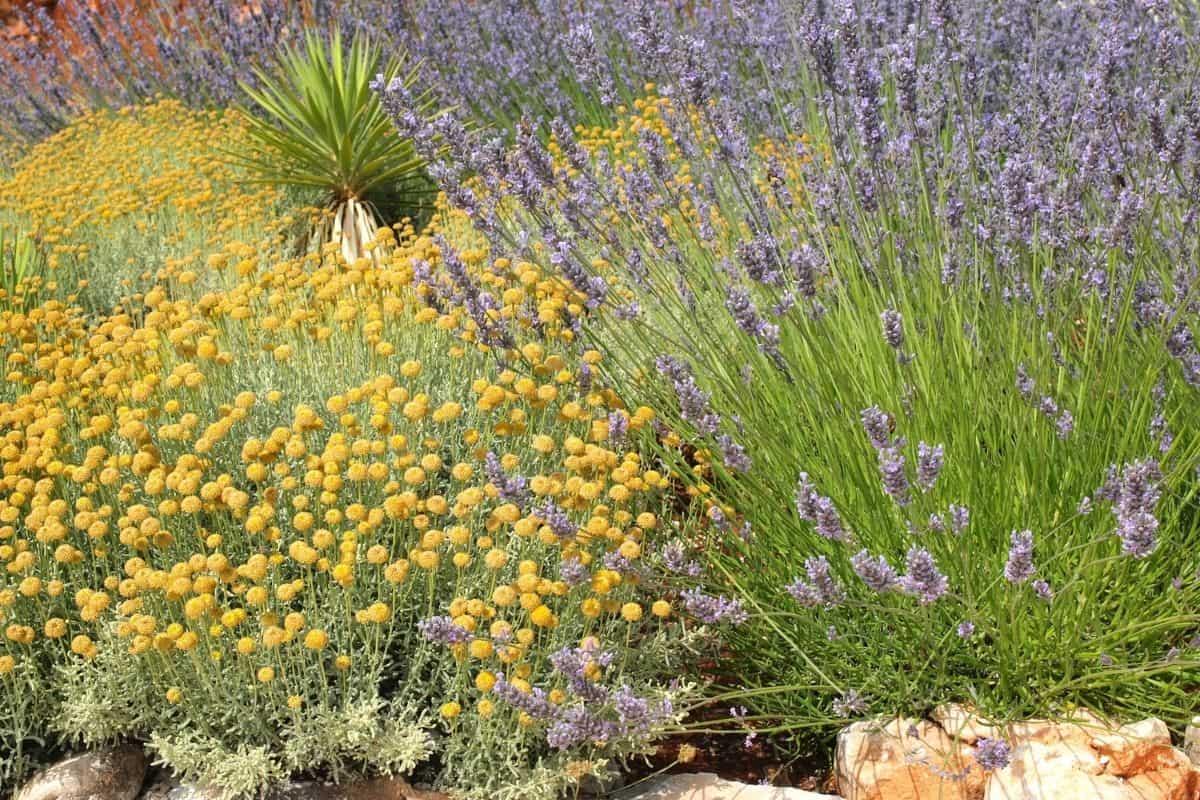 Mediterranean dry rock garden