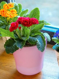 bright colored indoor plants