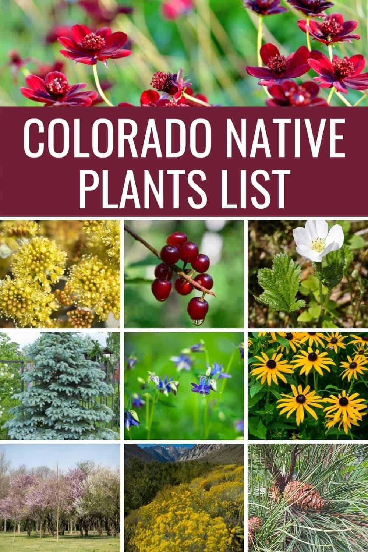 Colorado native plants list