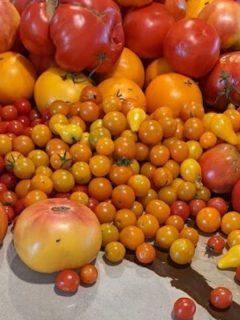 colorful tomato harvest