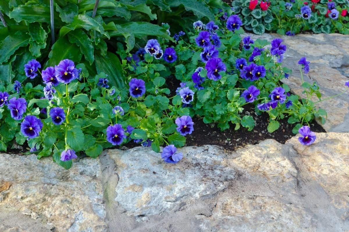 flower bed surrounded by large boulder