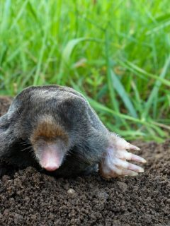 garden mole on top of a hill it made