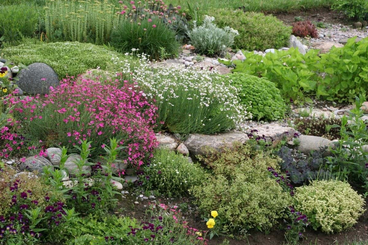 hilly rock garden