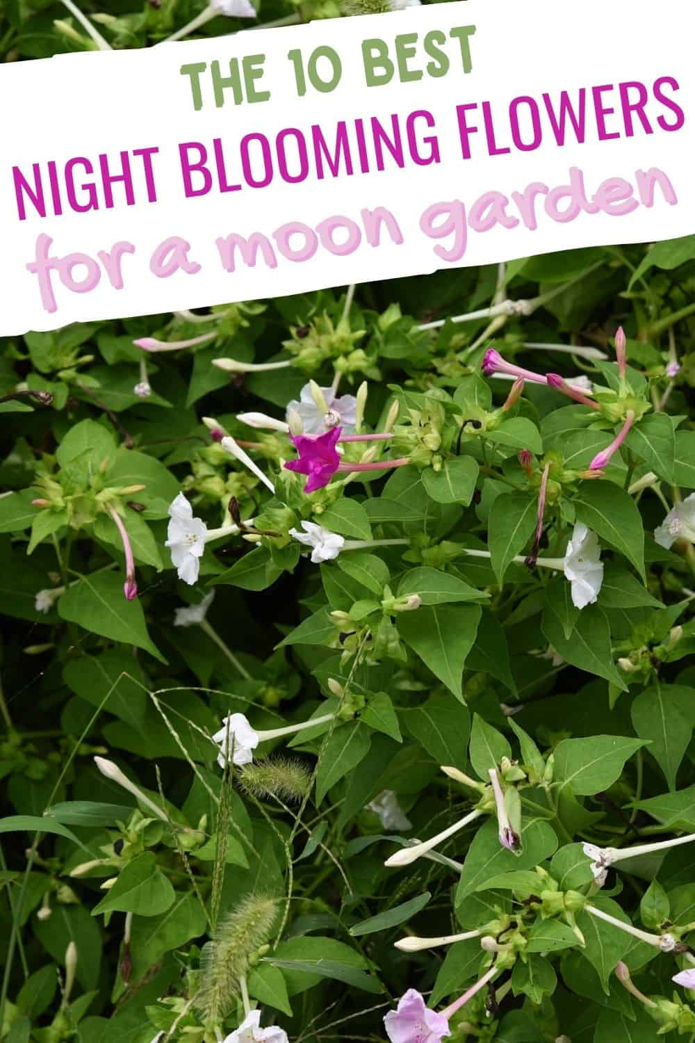 The 10 best night blooming flowers for a moon garden