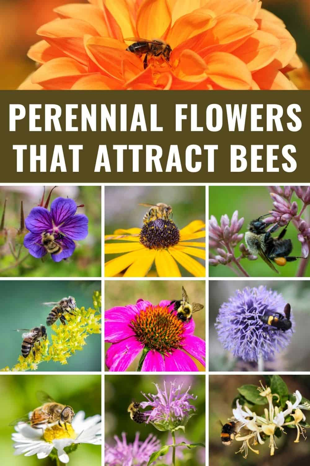 Perennial flowers that attract bees