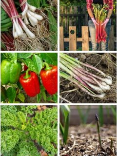 a collage of perennial vegetables