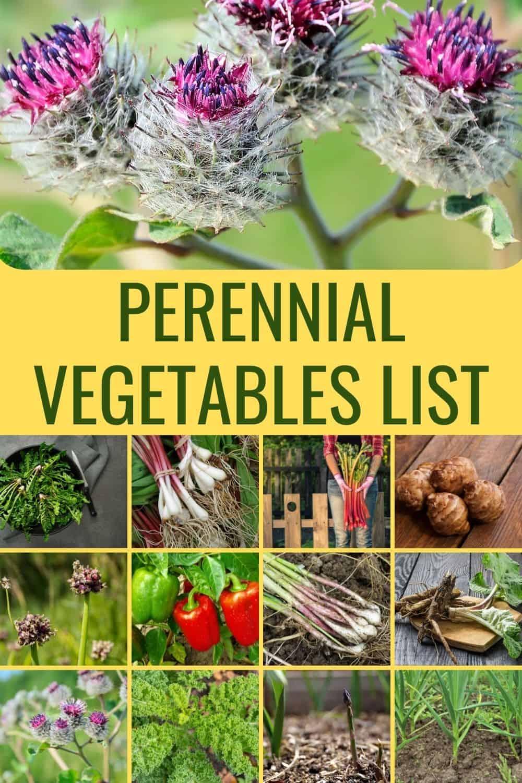 Perennial vegetables list