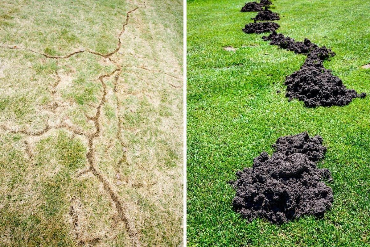 voles versus moles garden damage