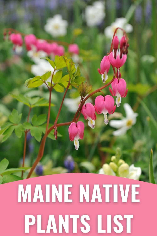 Maine native plants list