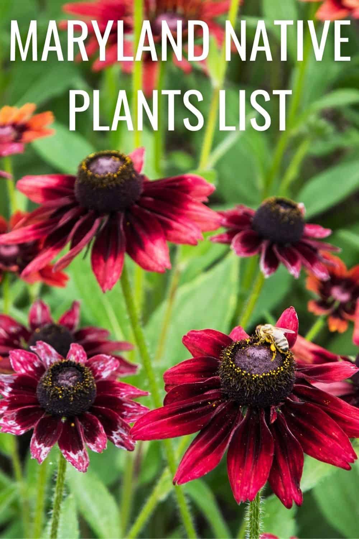 Maryland native plants list