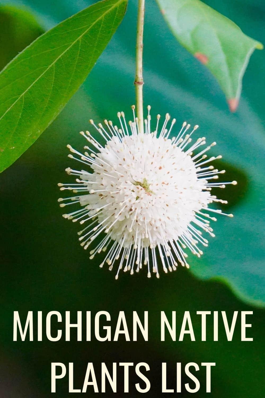 Michigan native plants list