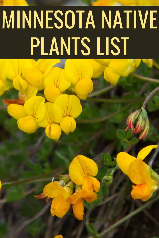 Minnesota native plants list