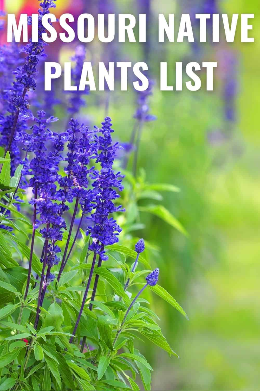Missouri native plants list