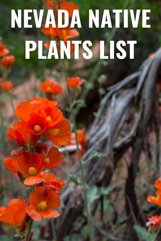 Nevada native plants list