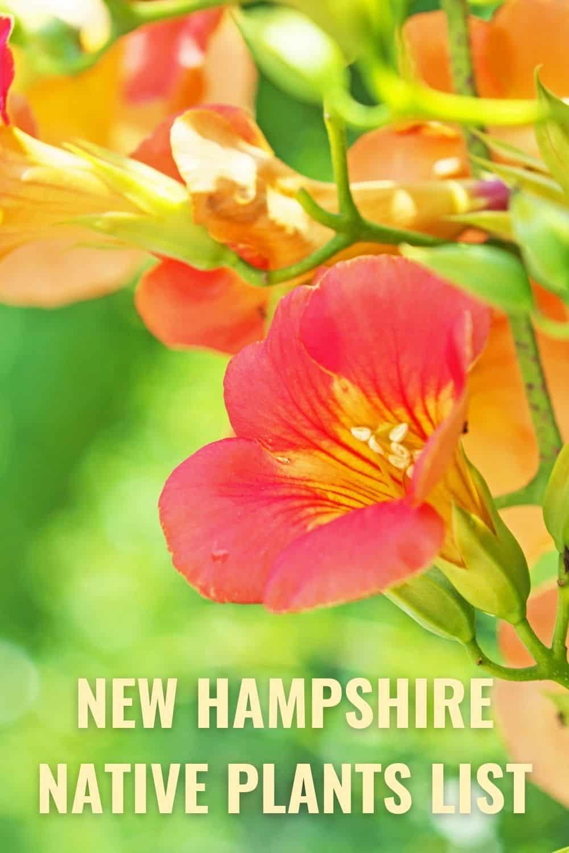 New Hampshire native plants list