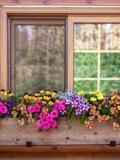 window box with colorful flowers