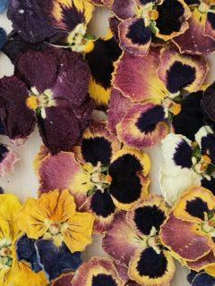 dried viola flowers