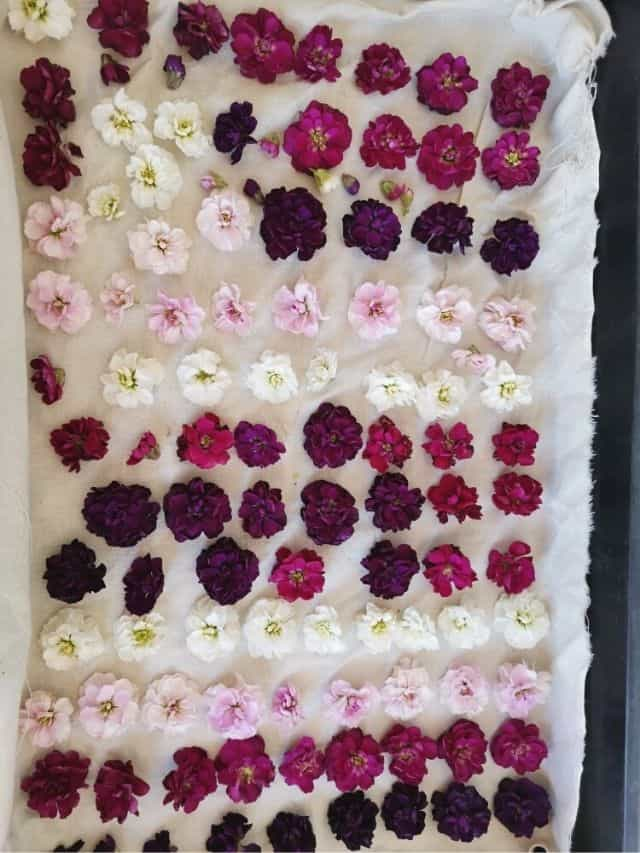 flowers laid out to dry
