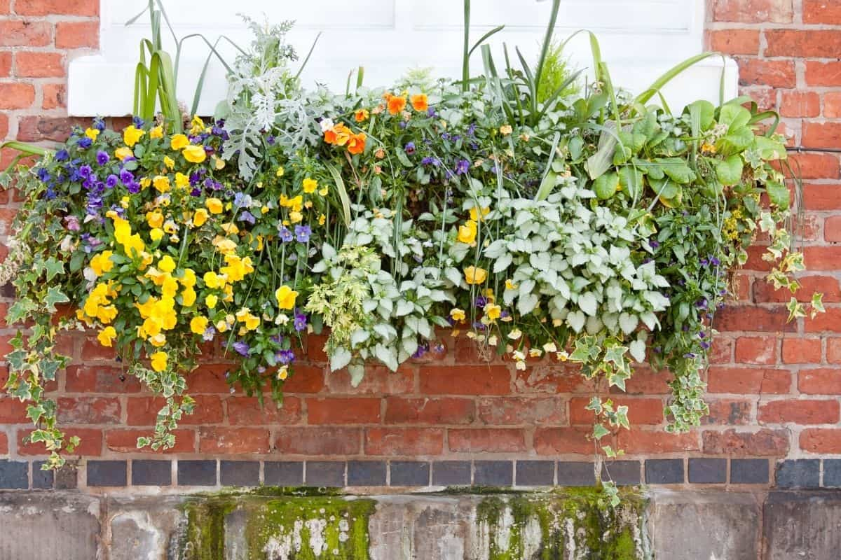 bright colored flowers in a summer window box