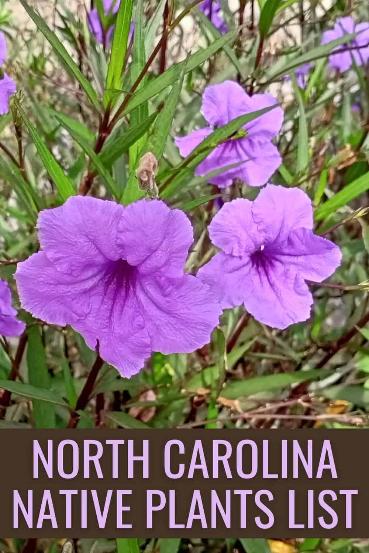 North Carolina native plants list
