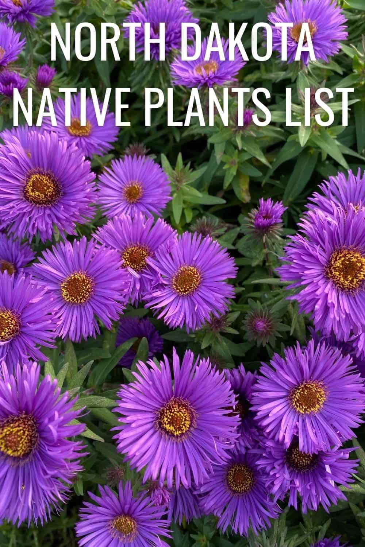 North Dakota native plants list