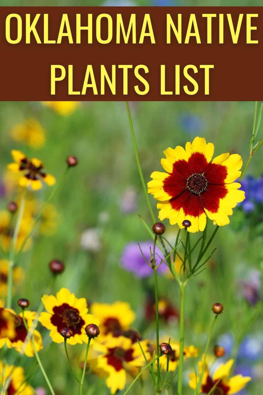 Oklahoma native plants list