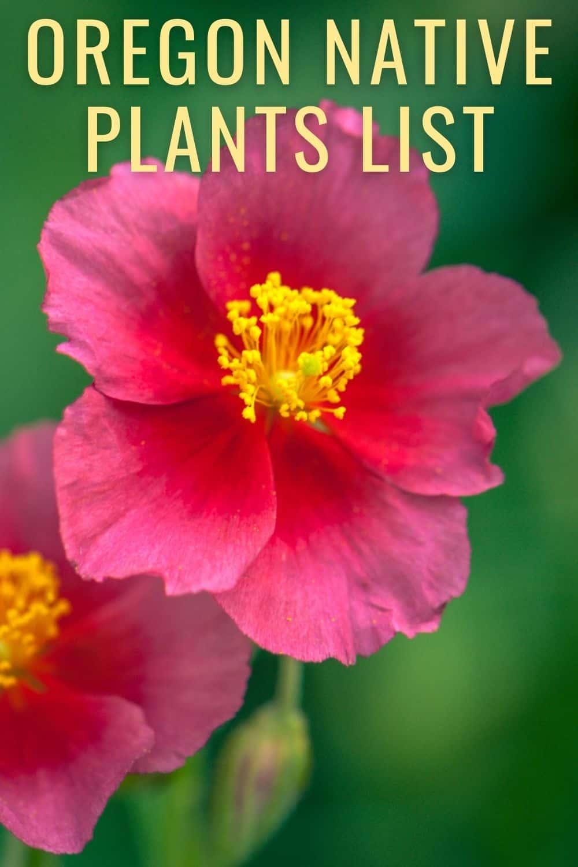 Oregon native plants list