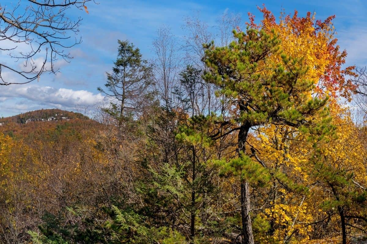 Talcott Mountain State Park in the fall