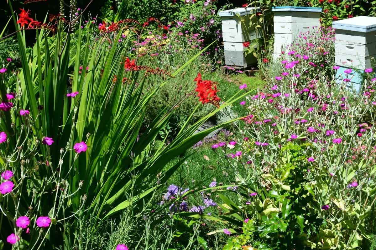 bee garden with lots of flowers