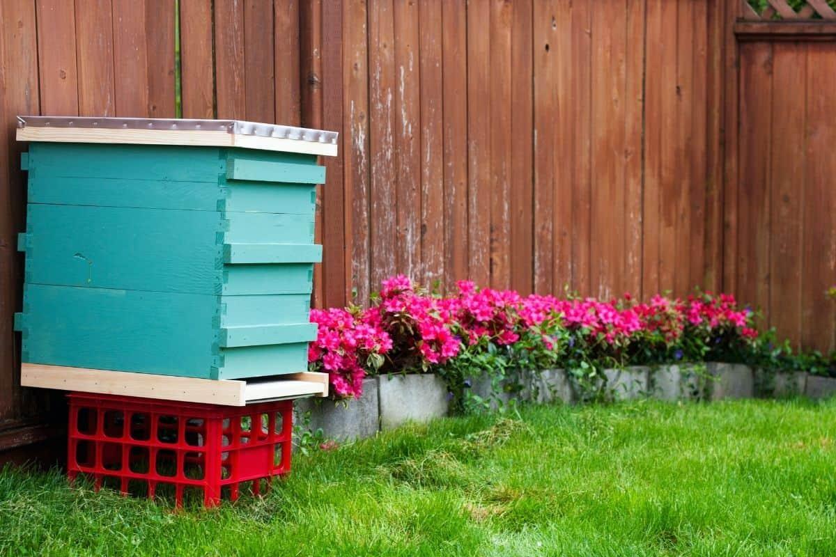 blue beehive amd red flowers in a garden corner