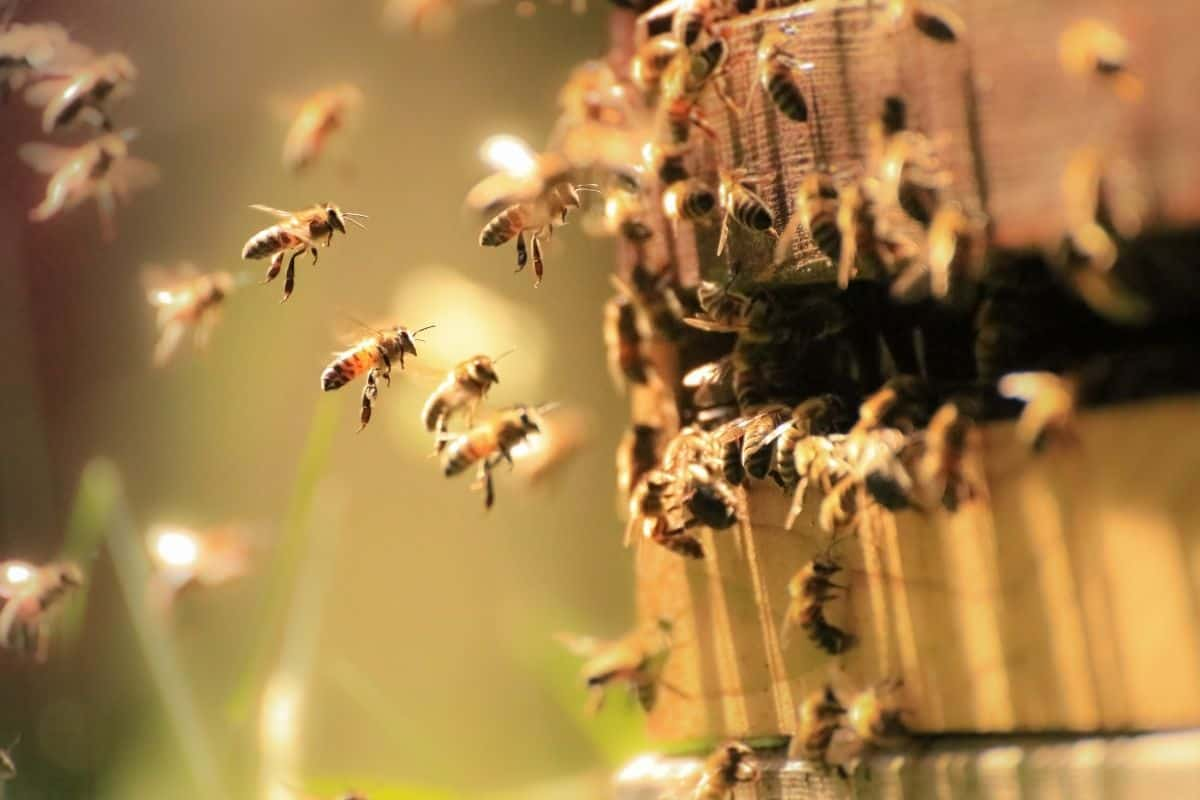 bees flying towards beehive