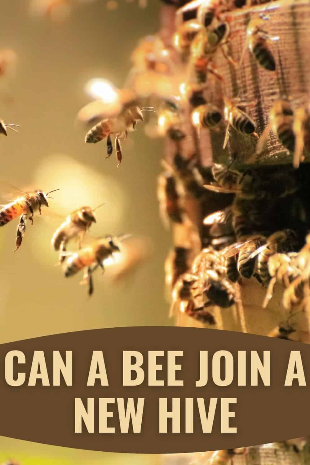 Can a bee join a new hive