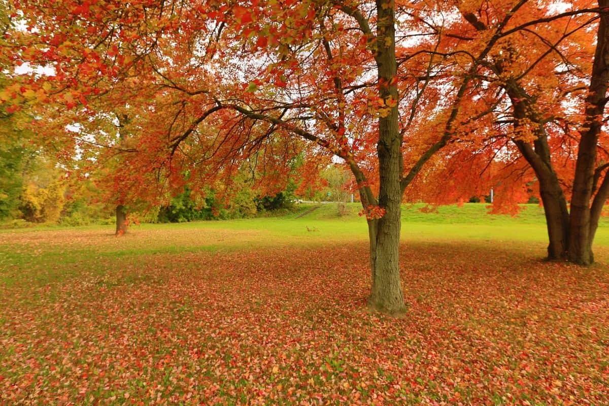 Fall Leominster foliage