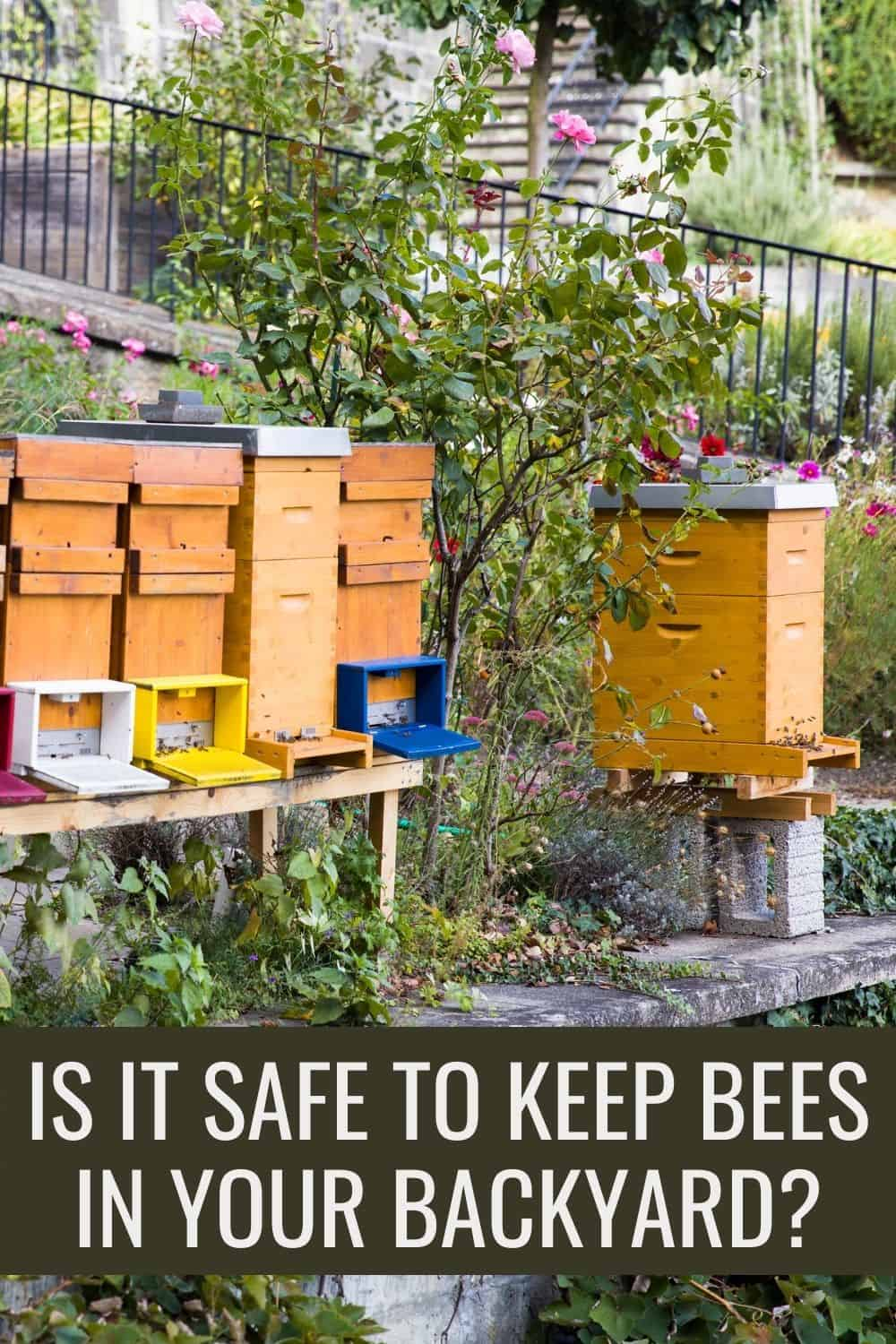 Is it safe to keep bees in your backyard?