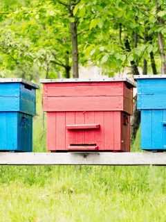 painted beehives